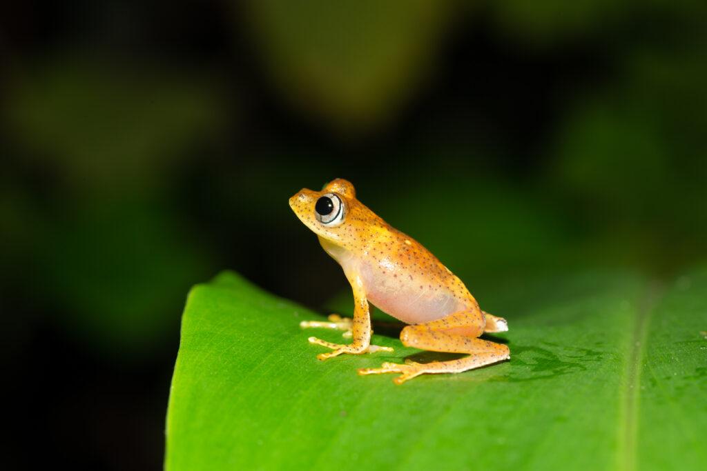 Der Frosch vom Teich
